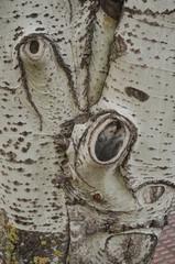 sequoia25