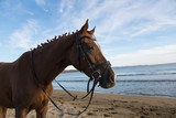 Horse on the beach at evening