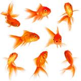 Fototapety Goldfish