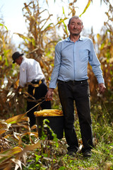 Farmers at corn harvest