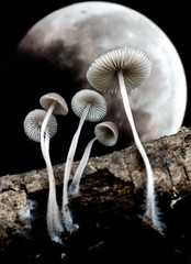 moon and mushrooms