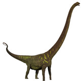 Mamenchisaurus youngi Profile