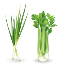 Green onion and celery. Vector illustration.