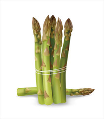 Asparagus. Vector illustration.