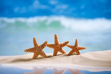 étoiles de mer avec l'océan, la plage et paysage marin