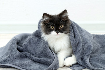 Little cute kitten with towel on floor