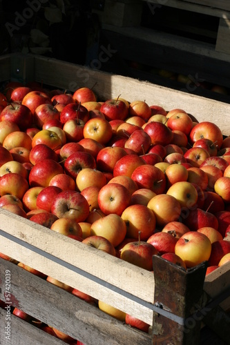 apples container 2