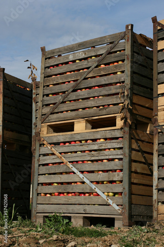 apples container shipping 3