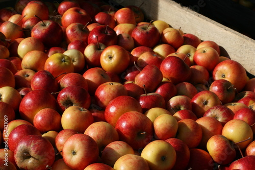 apples container