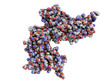 cyclic ADP ribose hydrolase (CD38) protein
