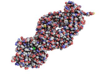 Prostate-specific antigen PSA structure