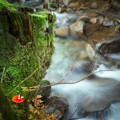 fungo rosso