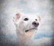 Close-up of mixed-breed white dog in front on grunge background
