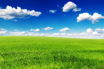 green grass on spring field