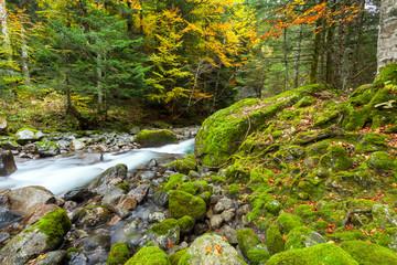 bosco con torrente in autunno