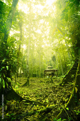 Tropical Rainforest in Malaysia during early morning with fogs
