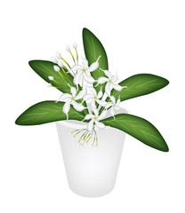An Illustration of Cape Jasmine in A Flower Pot