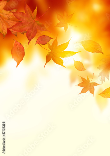 Autumn Falling Leaves