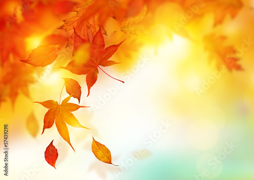 Deurstickers Bomen Autumn Falling Leaves