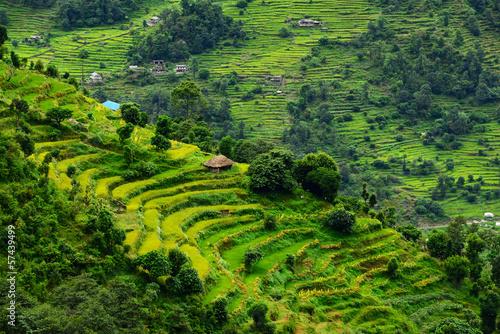 Tuinposter Nepal Terraced rice fields. Himalayas, Nepal