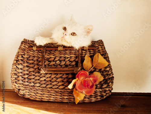 Kitten in a handbag