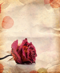 Dried red rose and leaves