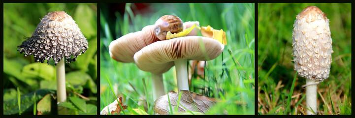 Triptyque de champignons