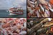 BREIZH - Palangrier - Pêche du Jour