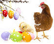 easter eggs and chickens with her mother hen