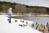 Feeding ducks at winter