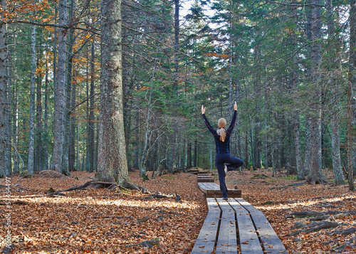 Joga in the woods