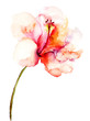 Quadro Decorative pink flower