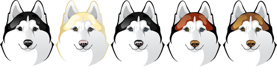 Vector head of a dog breed Siberian Husky