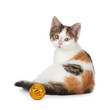 Cute calico kitten sitting next to a toy on a white background.