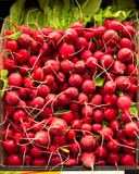 Red radishes in a pile