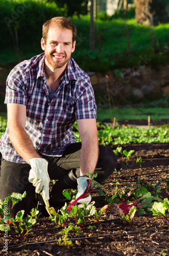Happy farmer smiling and harvesting organic vegetables