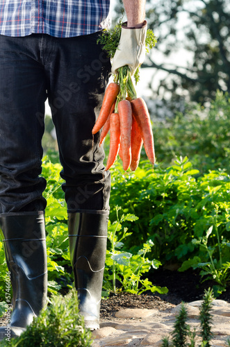 Local farmer holding a bunch of carrots