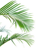 Fototapety Palm leaves