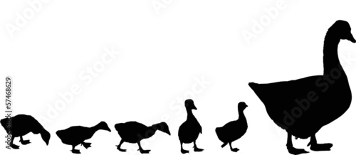 newborn gosling and goose silhouettes isolated on white