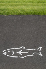 Fish and Arrow on Pavement