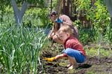 Cute little boy weeding the vegetable garden