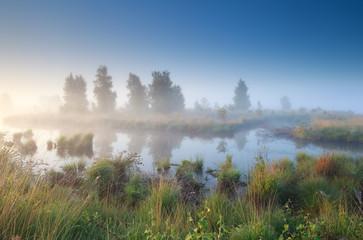 silent misty morning over swamp