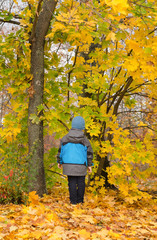 Child standing in colourful autumn woodland