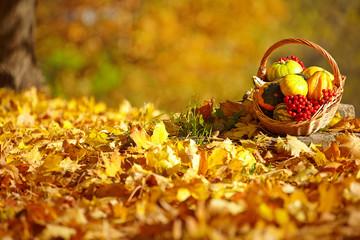 Autumn gardening background