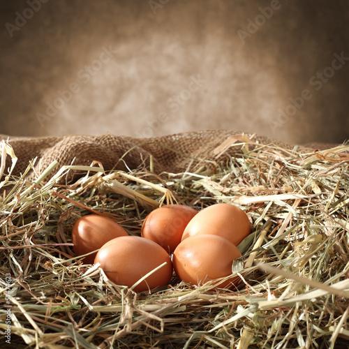 eggs - 57474623