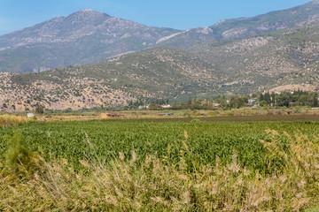 Landschap rond Milete