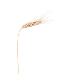 Close up of ripe wheat.