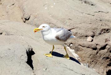 Close up white seagulls on rocks.