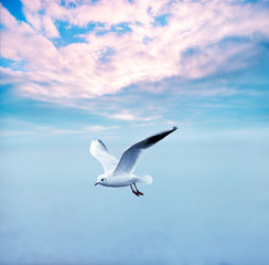 gull soaring against a clouds sky