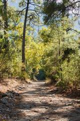 Milli national park bij Kusadasi